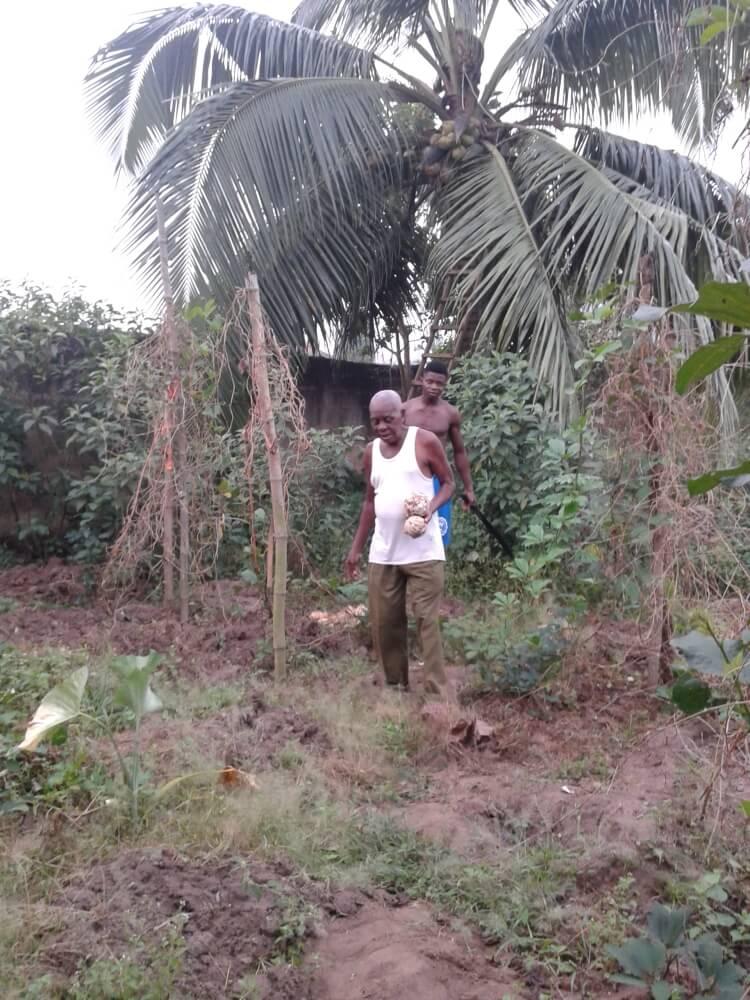 A tata i Izu zbierają kokosy...